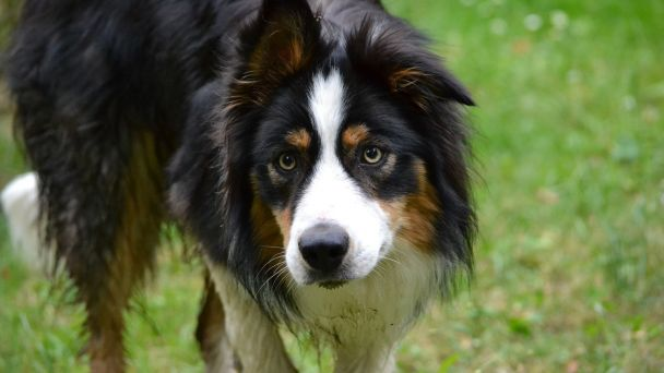Upozornenie pre majiteľov psov a iných zvierat
