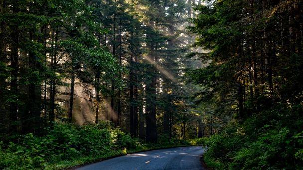 Určenie lesného celku JELENEC
